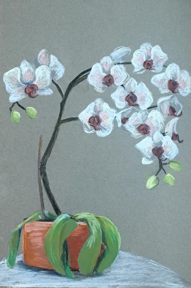 Chris' Orchids